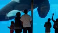 ������ ������� / Blackfish (2013) WEB-DL (720p)