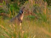Жемчужины дикой природы Австралии / Australian Wildlife Encounters (2004) DVDRip