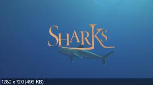 Акулы 3D / Sharks 3D (2004) Blu-ray + BDRemux + BDRip 720p