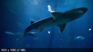 Океаны за стеклом / Oceans In Glass (2009) HDTV 1080i