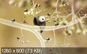 Botanicula (2012/RUS/MULTi11/RePack by UltraISO)