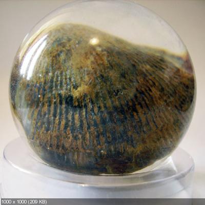 Чудеса Природы №7 - Раковина двустворчатого моллюска