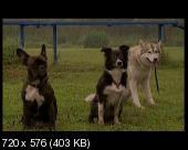 Марфа и её щенки 2: Приключения продолжаются (2007) DVDRip