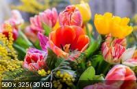 Красивые цветы в сборнике обоев для рабочего стола