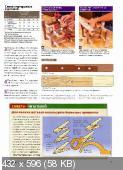 Wood Мастер №4  (май-июнь /  2009)